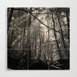 Sunrays Through the Trees Wood Wall Art