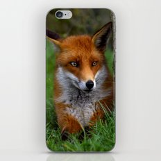 Bright eyes  iPhone & iPod Skin