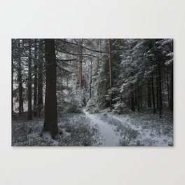 Forest in the late autumn Canvas Print
