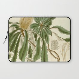 Banksia integrifolia (Coast Banksia) 1827 Laptop Sleeve