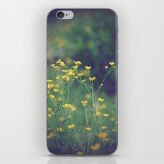 Buttercups  iPhone & iPod Skin