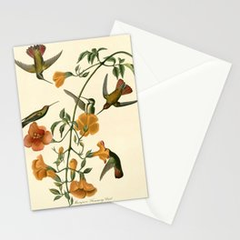 Mangrove Humming Bird (Trochilidae) Stationery Cards