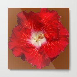 COFFEE BROWN RED & WHITE HIBISCUS FLOWER Metal Print