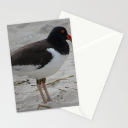 Oyster Catcher at Cape May Stationery Cards