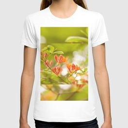Azalea Glowing Embers orange flowers T-shirt