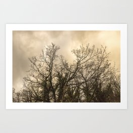 Branches on a misty morning Art Print