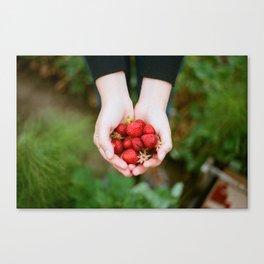 Harvold Berry Farm Canvas Print