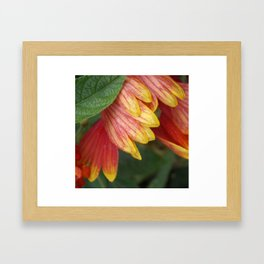 fall flower Framed Art Print