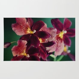 The mystery of orchid(13) Rug