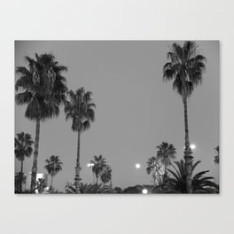 Palms in the night Canvas Print