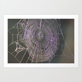Spider Web at Dusk Art Print