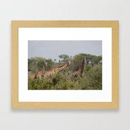 Giraffes Grazing in Tanzania Landscape Framed Art Print