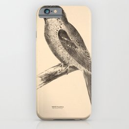 Vintage Print - Companion to Gould's Birds of Australia (1877) - Moth-Plumaged Podargus / Frogmouth iPhone Case