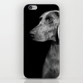 CHILI WEIMARANER iPhone Skin