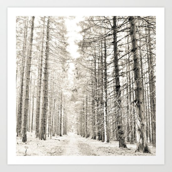 spruce forest Art Print