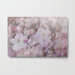 Pastel Pink Azalea Flowers In Soft Spring Light Metal Print
