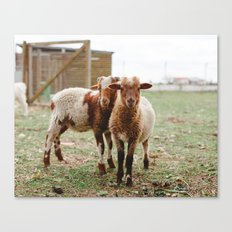 Counting Sheep Canvas Print