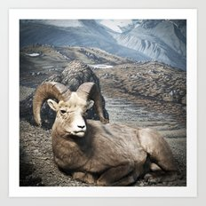 Tom Feiler Sitting Ram Art Print