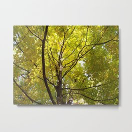 A Yellow Canopy Metal Print