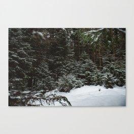 Winter forest landscape. Canvas Print