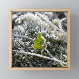 Frosty Fern leaf | Winter in The Netherlands | Fine art nature photography Framed Mini Art Print