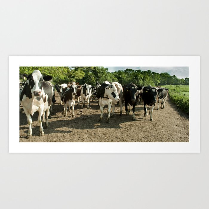 Cow panoramic Art Print