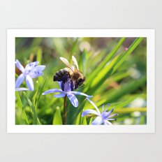 Bee and Blue Flower Art Print
