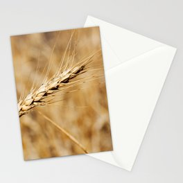 Wheat Stalk Photography Print Stationery Cards