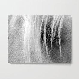 Palomino in Black and White Metal Print