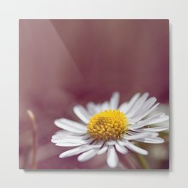 Daisy small flower macro with purple background copy space Metal Print