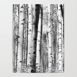 Aspens in Black + White Poster
