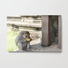 Angkor Wat Long-Tail Macaque (Monkey), Cambodia Metal Print