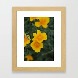 California Poppies Framed Art Print