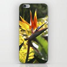 Bird of Paradise II iPhone & iPod Skin
