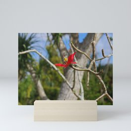While the Mockingbird Sings-horizontal Mini Art Print