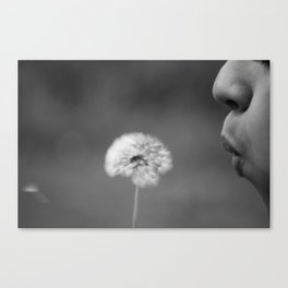 Dandelion Black & White Canvas Print
