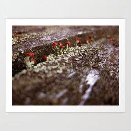Martian Moss Art Print
