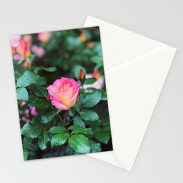 Sorbet Roses II Stationery Cards