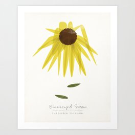 Blackeyed Susan Modern Botanical Art Print