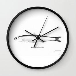 Engraulis encrasicolus Wall Clock