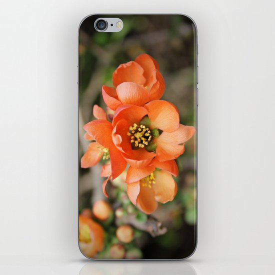 Orange Blossoms iPhone & iPod Skin