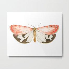 Ornate Moth Metal Print