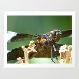 summer dragonfly IV Art Print