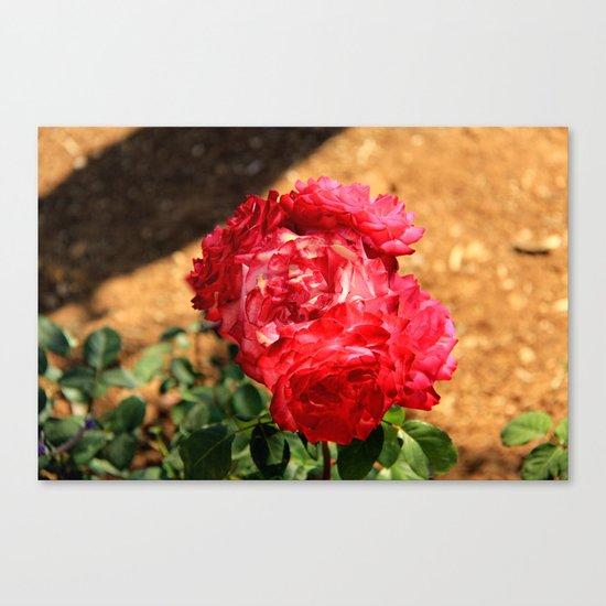 flowers again Canvas Print