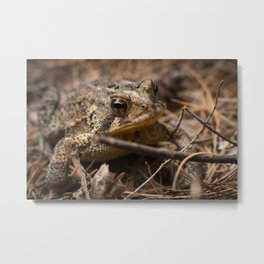 Toad in Camo Metal Print
