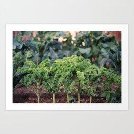 Organic, California Grown Kale Art Print