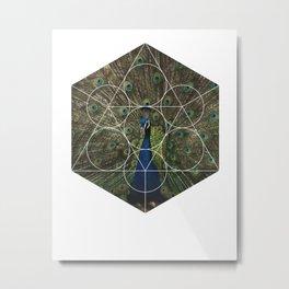 Beautiful Peacock - Geometric Photography Metal Print