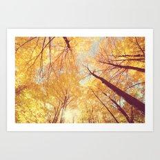 Fall Forest Skies Art Print