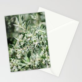The olive tree | Crete, Greece green pastel art print photography  Stationery Cards