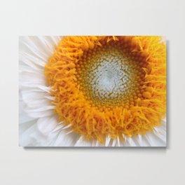 White orange daisy flower - Greg Katz Metal Print